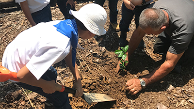 CooperVision employees tree planting